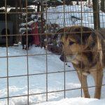 Adománygyűjtés a gyömrői Árvácska Állatmenhelynek
